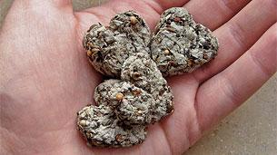 seed-bomb