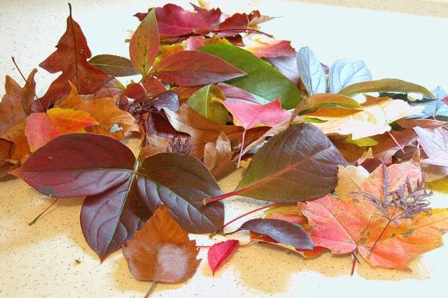 Πώς να αποξηράνεις φύλλα και λουλούδια 1