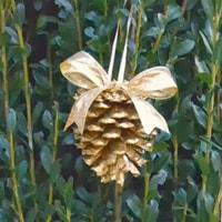 pinecones05