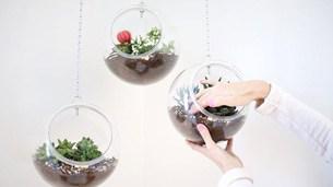 terrarium_plastic_bowl_intro