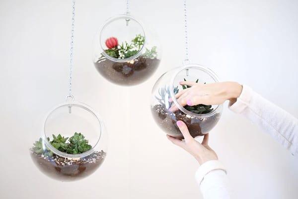 terrarium_plastic_bowl_main