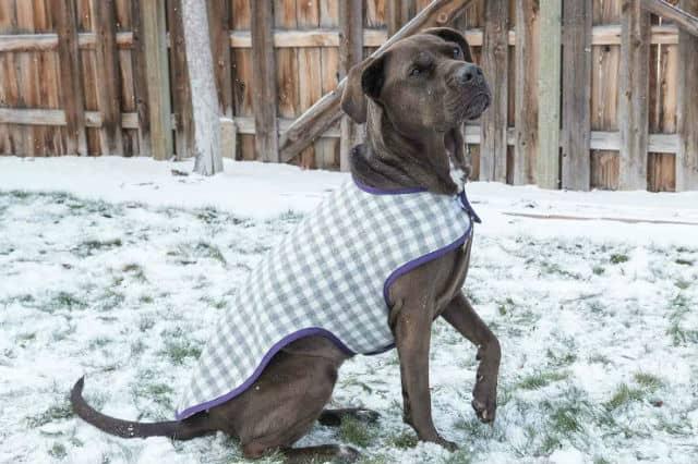 DIY παλτό για τον σκύλο σου 1