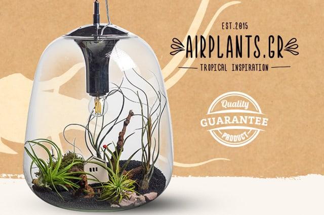 Airplants.gr: Ηλεκτρονικό κατάστημα αερόφυτων 2