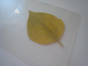 Σουβέρ/ Σουπλά με φθινοπωρινά φύλλα 1