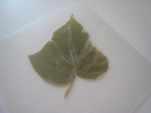 Σουβέρ/ Σουπλά με φθινοπωρινά φύλλα 4