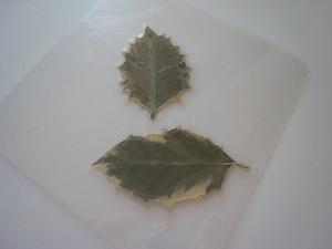 Σουβέρ/ Σουπλά με φθινοπωρινά φύλλα 7
